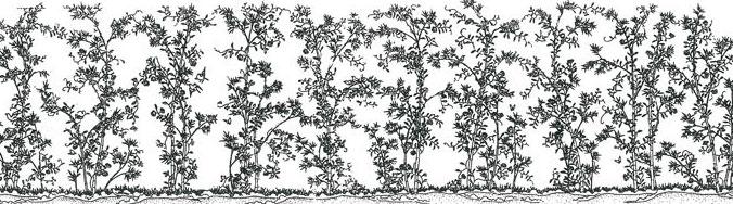 Baidunzi (blueprint)